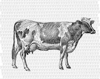 Printable Cow Illustration Cow Vintage Graphic Cows Antique Illustrations Digital Cow Image 2168