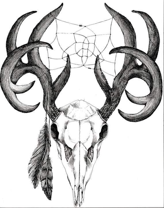 White Tail Deer Sckull Drawn: White Tail Deer Skull With Weaving And Feathers