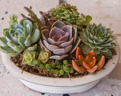 Mother's Day Succulent arrangement in oval bonsai container/bowl-Small