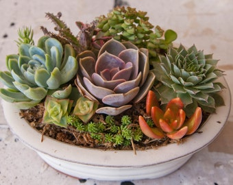 Succulent arrangement in oval bonsai container/bowl-Small