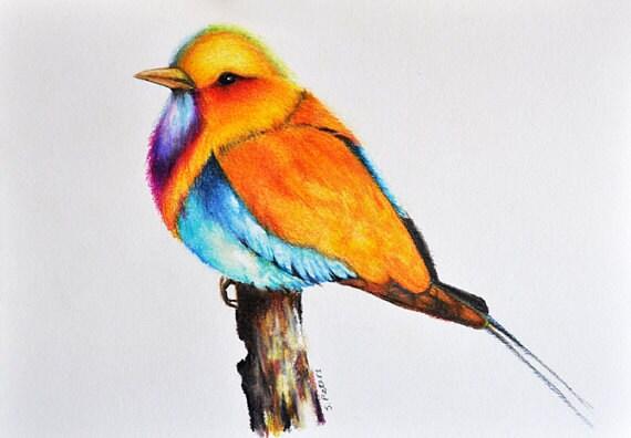 Oiseau exotique 2 couleur dessin original pr t la for Oiseau par la couleur