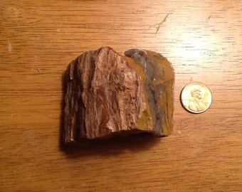 Petrified Wood (1 piece) Multicolored with Clear (8)