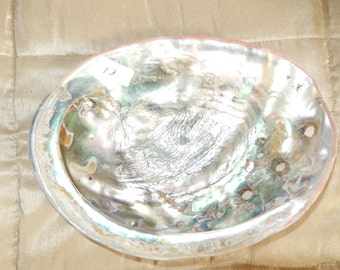 ABALONE SEA SHELL #13