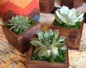 Succulent in tiny wood planter. Great gift idea or keeper plant/succulent for your Home decor. - FlowersontheFly