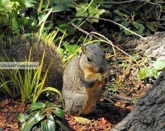 Squirrel, Dallas Arboretum and Botanical Garden
