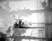 Black and white photo. Palm Trees.  Santa Monica. Beach. California - MATADORdesigns
