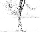 Nature Photography / Black and White Photography / Canvas Wall Art / Photo Transfer / Modern Wall Art /