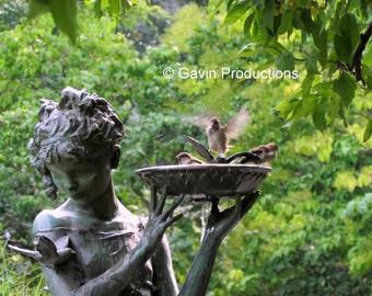 Central Park Bird Bath