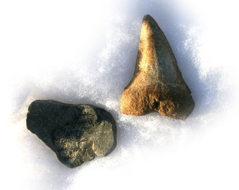 Artifacts Collection - Prehistoric Shark Tooth & Fossil