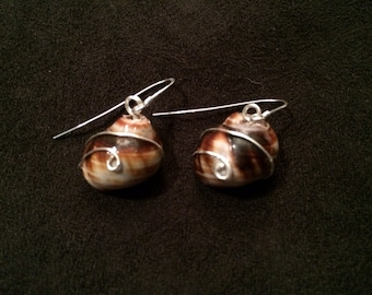Seashell Earrings Wrapped in Sterling Silver