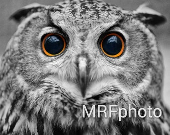 Owl Eyes Matted Photo Print 8x10 (11x14 Matted)