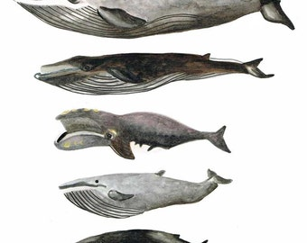 Original Five Whale Stack Watercolour Painting Illustration - A4
