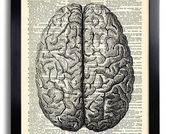Brain Human Anatomy Anatomical Brain Dictionary Art Print, Anatomy Brain Poster, Medical Illustration, Vintage Human Brain Wall Decor 028