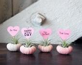 valentine // air plant garden
