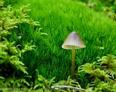 Sweet Being, Tiny Forest Mushroom, Mossy Realm, Forest Fungi, Fairy Realm, Photograph or Greeting card