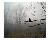 Foggy Woods, Woodland Fog Scene, Corvus Corax, Dark Weather, Gothic - Raven In Fog