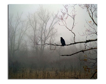 Foggy Woods, Woodland Fog Scene, Corvus Corax, Dark Weather, Gothic - Raven In Fog