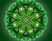 True - Lily of the Valley Vibrational Flower Mandala Art