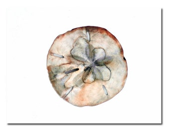Painted Sand Dollar Art Print Seashell Minimalist Beach Art Sea Shell