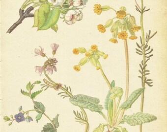 Flower Print - Ladies Smock - Vintage Botanical Book Plate Print - Cuckoo Flower - Cowslip - Diary of Edwardian Lady - Edith Holden - 1906