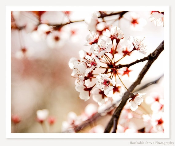 Pink - Cherry Blossom Photograph - Springtime Nature Photography - Pink Flowering Branches - Pastel Color Photo