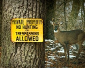 White Tailed Deer Buck and No Hunting Sign posted on a Tree in Michigan No.148 - A Fine Art Wildlife Photograph