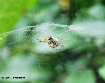 "5x7 Nature Inspired Single Photo Greeting Card or Print--Happy Anniversary--""Arachnid Embrace""--#33"