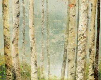 Birch Forest 01: Giclee Fine Art Print 13X19