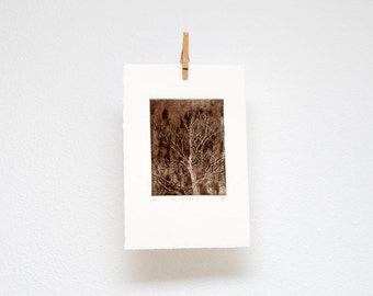 Tree silhouette no. I, etching, hand printed, original wall art, woodland print
