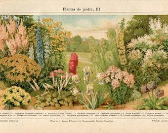 Garden Plants Old Botanical Print, Vintage Chromolithograph 1920s