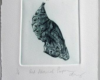 Chrysalis. Fine art drypoint print. Red Admiral pupa