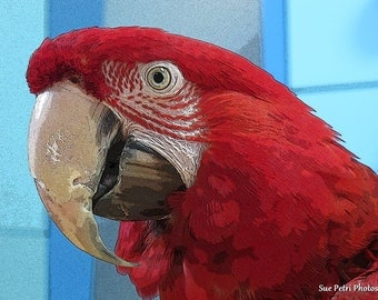 Bird Photography, Animal Photography, Greenwing Macaw Photos, Photography, Wall Art, Color Photography, Digitally Enhanced, Red parrot