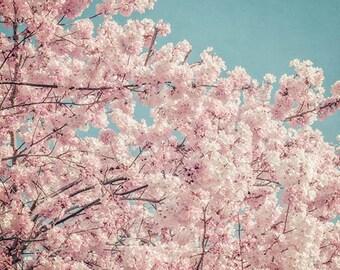 Large Wall Art, Pastel Pink Cherry Blossoms, Fine Art Photography Print, Flower Photography, pastel pink, aqua blue sky