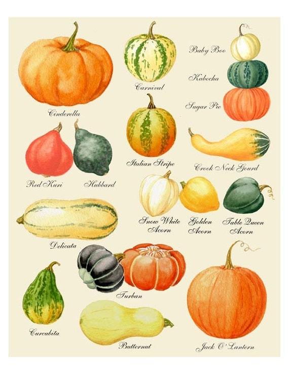 pumpkin print pumpkin art pumpkin chart print harvest print autumn print thanksgiving print halloween print pumpkin varieties - Pumpkin Pictures To Print