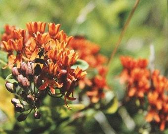 Orange on Orange II, Wildflower Series,  Art Photography