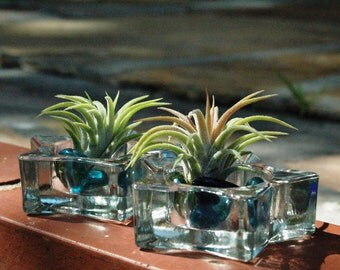 Colorful Air Plants in Glass Tea Candle Terrariums with Colored Glass Beads - Set of 2
