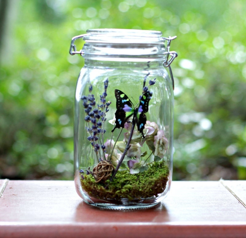 5 Eco Friendly Halloween Decoration Ideas: Gift For Her Eco-Friendly Decor Butterfly Terrarium Kit In