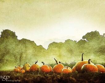 Field of Pumpkins   Fine Art Photograph, Fall Art, Wall Décor, Minimalist, Orange Green Autumn