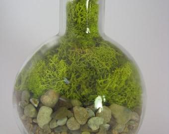 Preserved Moss Terrarium, Apothecary Bottle