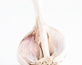 Garlic Photograph, Food Photography, Wall Art, Kitchen Decor, Home Decor, Dining Room Decor, Restaurant Decor, Vegetable Photoraphy