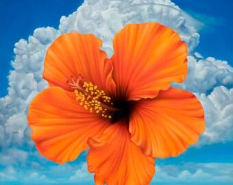 Orange Hibiscus - Temple of Flora