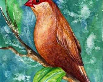 Finches. Original Painting, Watercolor, Handpainted, 7,6 x11,6 inch. NOT a print! Original! Tatiana-Art
