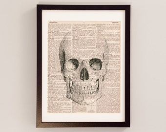 Vintage Skull Print - Anatomy Art - Print on Vintage Dictionary Paper - Doctor Gift - Medical School - Front View of Skull