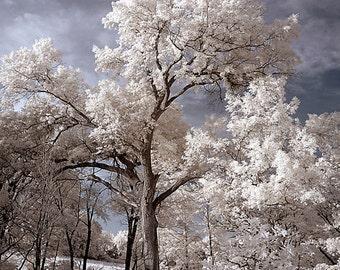 "Fine Art Infrared Photograph, ""Oak Openings"", Libertyville, IL"