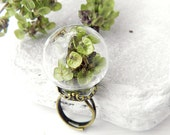 Real Dried Herbs of Basil Large Glass Globe Adjustable Bronze Ring