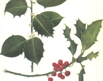 Vintage Tree Print, Holly Tree, Holly Berry, Botanical Book Plate Hardwood 15, Nature, Landscape, Frameable Art, 1977, Raymond