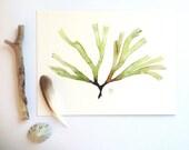 Botanical illustration - Green Seaweed art - Watercolor painting - Botany print - Green algae - Fine art archival reproduction