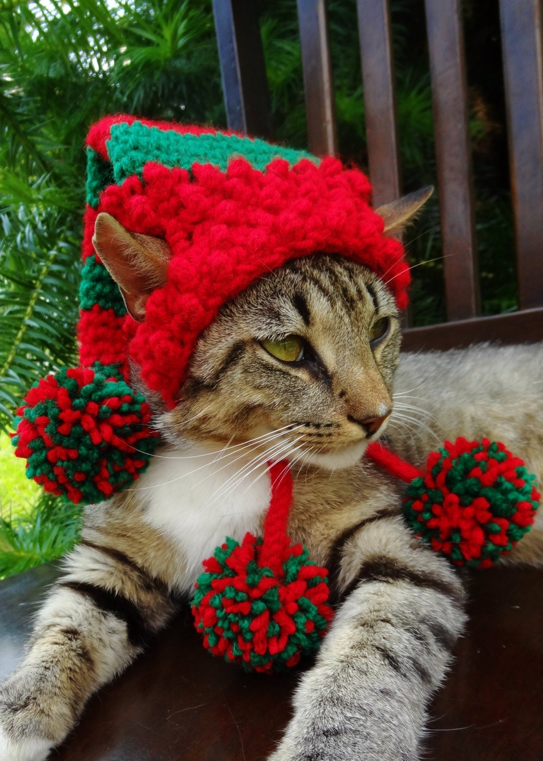 Image Result For Cap For Cats