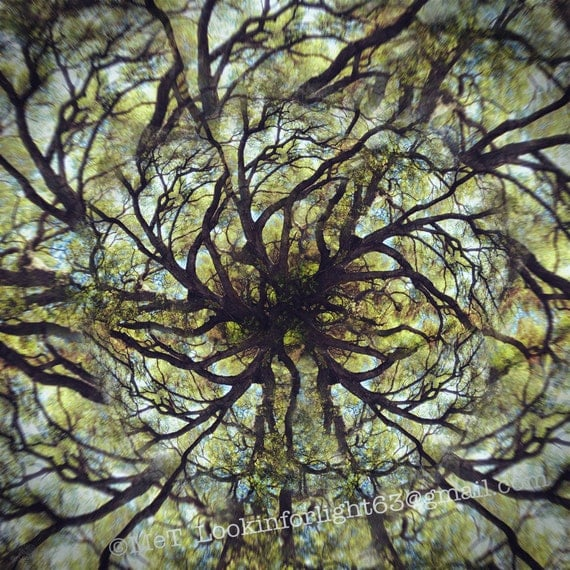 Mandala Tree Photo, Live Oak Tree Art, Surreal Tree, Photo Montage, Limited Edition, Live Oak, Tree Mandala, Abstract Woodland, Art Photo