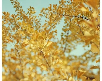 Tree Photograph - Nature Photography - Yellow Art - Fine Art Photography - Ginkgo 5 - Autumn Leaves - Fine Art Photography - Alicia Bock Art